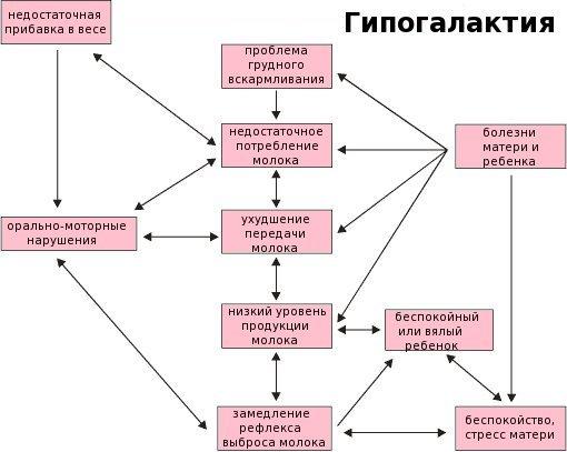 гипогалактия схема