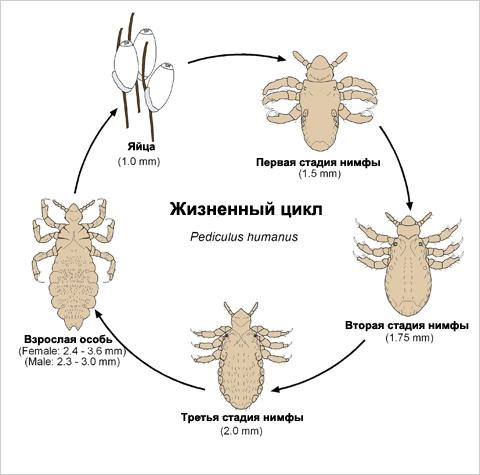 как удалить паразитов из организма человека