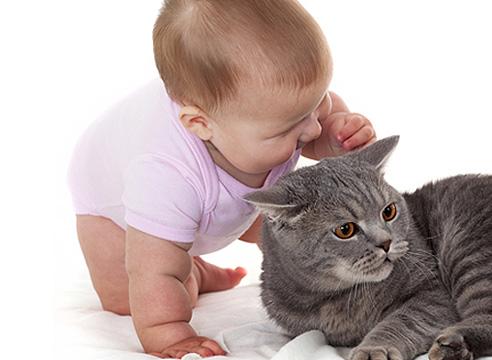 Аллергия на шерсть животных у новорожденных