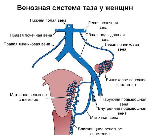 varikoz-1